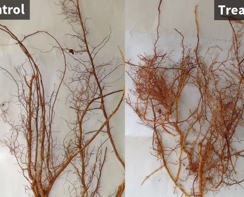 QuadSHOT Almond Trial Root Results